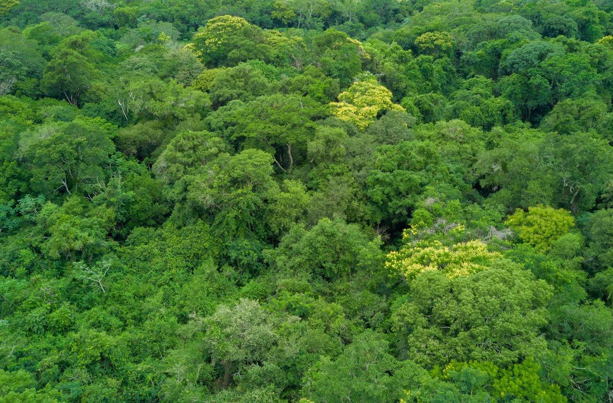 El Paraiso Verde Urwald