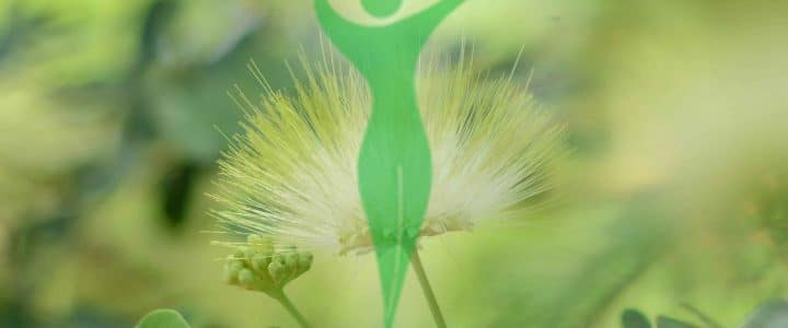 El Paraiso Verde logo